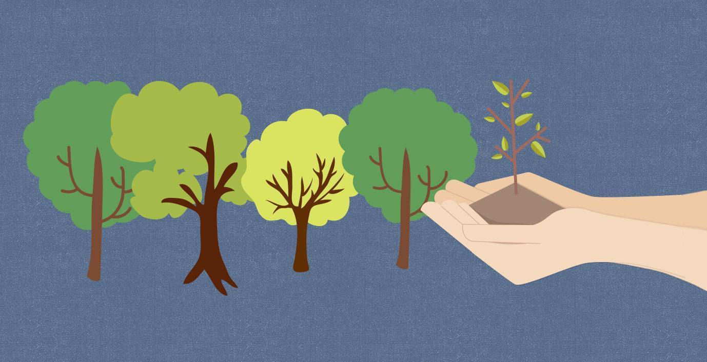JScreen tree plant a seed illustration